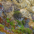 Seaside Cliff Garden In Point Lobos State Reserve Near Monterey-california  by Ruth Hager