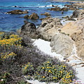 Seaside Flowers And Rocky Shore by Carol Groenen