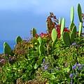 Seaside Garden by Linda Morland