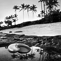 Seaside Treasure by Sean Davey