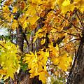 Seasons Change by Jim Thomas