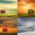 Seasons' Delight by Lourry Legarde