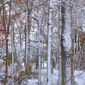 Season's First Snow by Gerlinde Keating - Galleria GK Keating Associates Inc