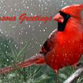 Seasons Greetings by Becky Herrera