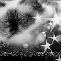 Seasons Greetings Bw by Theresa Campbell