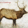 Season's Greetings Elk Card by Belinda Greb