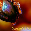 Season's Greetings- Iced Light by Joy McAdams