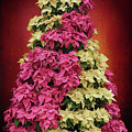 Season's Greetings - Poinsetta Tree by Susan Rissi Tregoning
