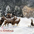 Season's Greetings  by Susan Kinney