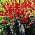 Seasons Greetings by Xueling Zou