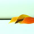 Seasons by Mark  Ross
