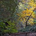 Romantic Autumn Rendezvous by Michele Myers