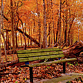 Seat To Autumn by Bonfire Photography