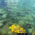 Seaweed by Judy Coggin
