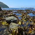 Seaweed by Natalia Wallwork