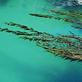 Seaweed Patterns by Larry Dale Gordon - Printscapes