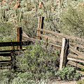 Secluded Historic Corral In Sonoran Desert by Cary Leppert