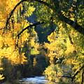 Secret Creek by Angie Wingerd