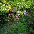 Secret Garden by Charles Stuart