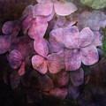 Secret Hydrangea 1538 Idp_2 by Steven Ward