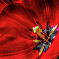 Secret Of The Red Tulip by Sandra A Fox