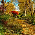 Secret Path Fall Perfection  by Debbie Fenelon