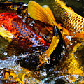 Secrets Of The Wild Koi 2 by September  Stone