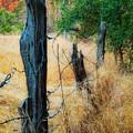 Sedona Fence And Field by Bob Coates