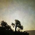 Sedona Landscape Xv by Dave Gordon