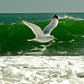 See Gull by Greg Fortier