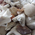 See Sea Shells Fom The Sea by Janremi B