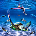 See Turtles by Keith Kos