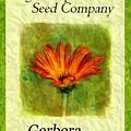 Seed Packet -- Gerbera Daisies by Judi Bagwell