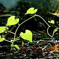 Seedling by Bonnie See