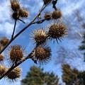 Seeds by Diane Dobrowolski
