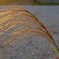 Seeds Of Sunlight by Douglas Barnett