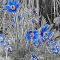 Seeing Blue by Scott Ballingall