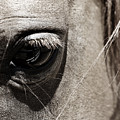 Stillness In The Eye Of A Horse by Marilyn Hunt