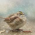 Seeking Warmth Songbird Art by Jai Johnson