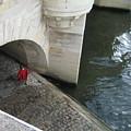 Seine by Victoria Heryet