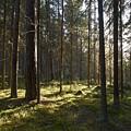 Seitseminen National Park by Jouko Lehto