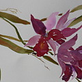 Selby Orchids by Tara Moorman