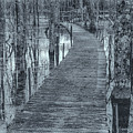 Selenium Boardwalk  by David Heilman