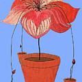 Self-seeding Pot Plants by SB Boursot