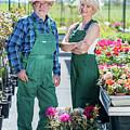 Senior Gardener And Middle-aged Gardener At Work. by Michal Bednarek