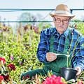 Senior Gardener Selecting A Tree. by Michal Bednarek