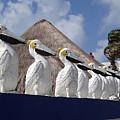 Sentry Pelicans by Ellen Henneke