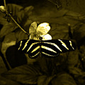 Sepia Butterfly And Flower by Laura Greco