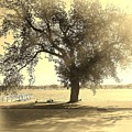 Sepia Colors In A Tree by Jake Whalen