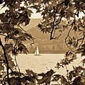 Sepia Sailboat by Andrea Barbieri